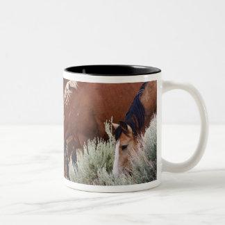 Manada salvaje del caballus del Equus del caballo) Tazas De Café
