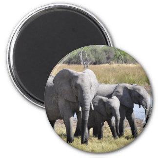 Manadas del elefante de África Imán Redondo 5 Cm