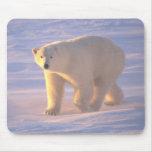Mañana 2 Mousepad del oso polar Tapetes De Ratón