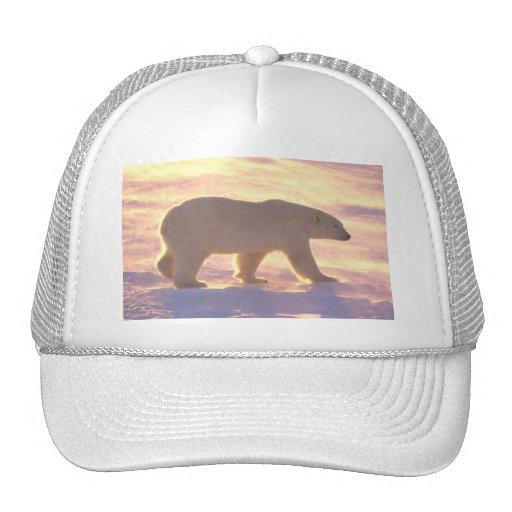 Mañana 3 del oso polar gorro