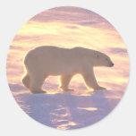 Mañana 3 del oso polar pegatinas redondas