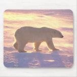 Mañana 3 Mousepad del oso polar Alfombrilla De Raton
