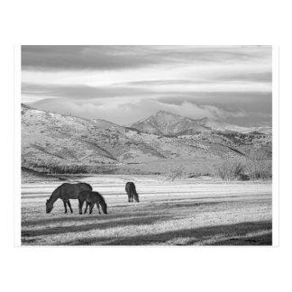 Mañana BW del país de Colorado de la montaña rocos Postal