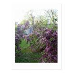 Mañana de la primavera tarjeta postal