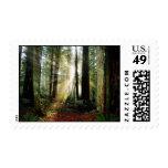 Mañana de la secoya timbres postales