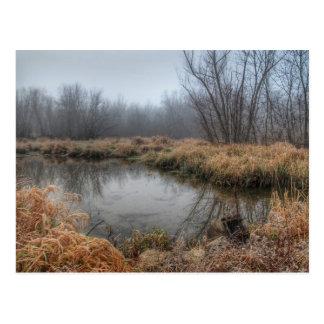Mañana de niebla en un pantano postales