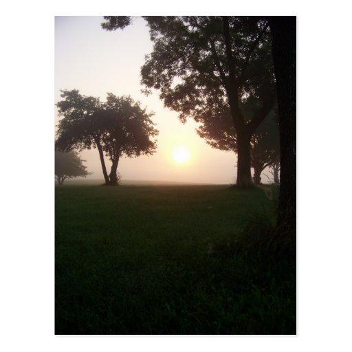 Mañana de niebla postales