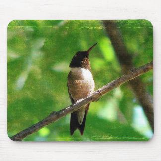 Mañana del colibrí mouse pads