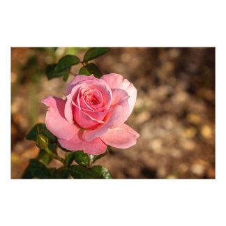 Mañana del color de rosa rosado impresion fotografica