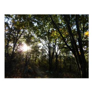 Mañana del otoño en el parque nacional de tarjetas postales