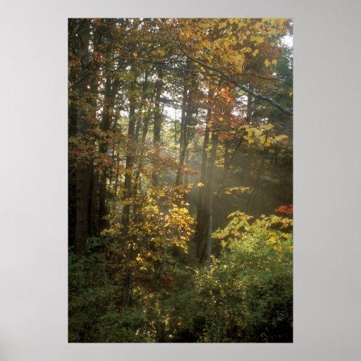 Mañana del otoño posters