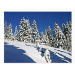 Mañana del polvo, prados alpinos… postal