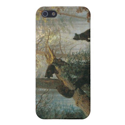 Mañana en un bosque del pino iPhone 5 protectores