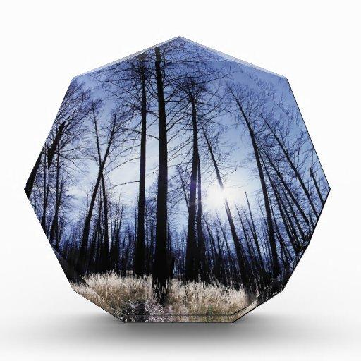 Mañana soleada del invierno de los árboles de la n