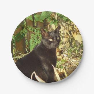 Mañana Sun del gato negro Plato De Papel De 7 Pulgadas