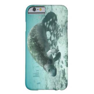 Manatee and Fish Barely There iPhone 6 Case
