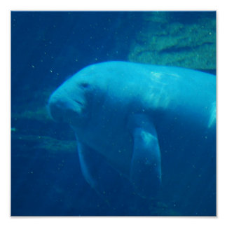 Manatee Floating Poster