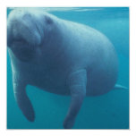 Manatee Invitation