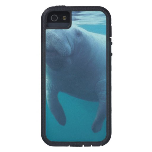 Manatee iPhone 5 Protectores