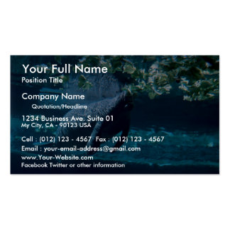 Manatee, Lowry Park Zoo, Tampa Bay, Florida, U.S.A Double-Sided Standard Business Cards (Pack Of 100)