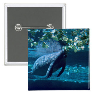 Manatee, Lowry Park Zoo, Tampa Bay, Florida, U.S.A Button