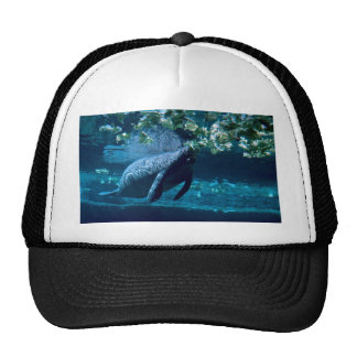Manatee, Lowry Park Zoo, Tampa Bay, Florida, U.S.A Trucker Hat