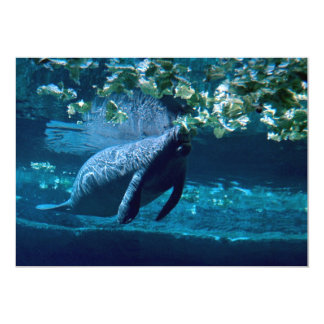 Manatee, Lowry Park Zoo, Tampa Bay, Florida, U.S.A Custom Invites