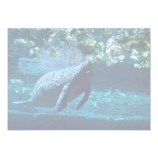 Manatee, Lowry Park Zoo, Tampa Bay, Florida, U.S.A Custom Announcement