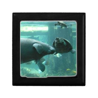 manatee N turtle_10x10 Cajas De Joyas