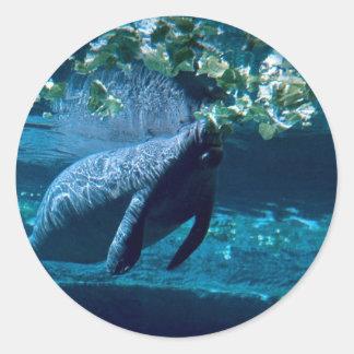 Manatee, parque zoológico del parque de Lowry, Pegatina Redonda