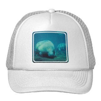 Manatee Photo Baseball Hat