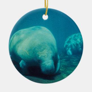 Manatee Photo Ornament