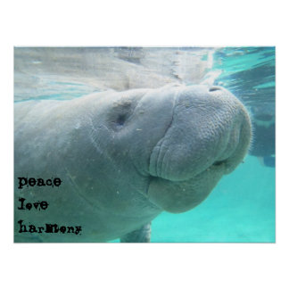 Manatee Posters