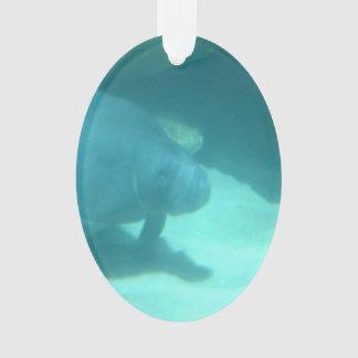 Manatee que flota en el suelo marino