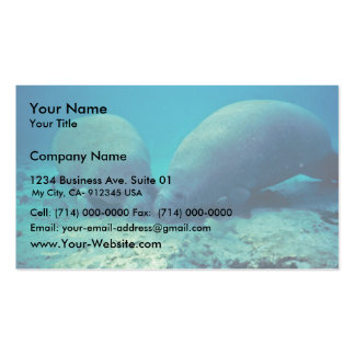 Manatee Rooting in Sand Business Card Templates