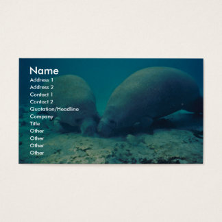 Manatee Rooting in Sand Business Card