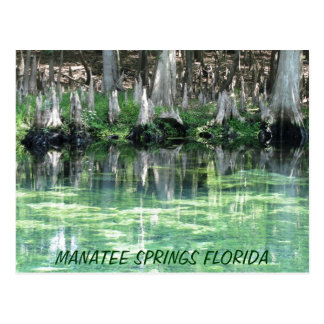 Manatee Springs Fl Postcard
