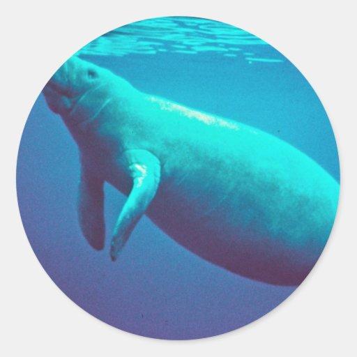 Manatee Surfacing to Breathe Classic Round Sticker