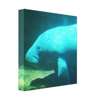 Manatee Swimming Canvas Print