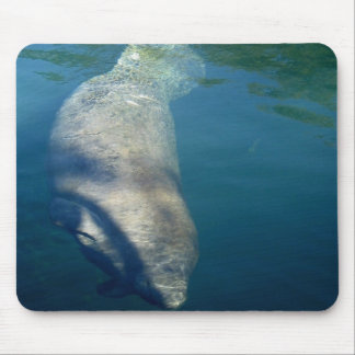 MANATEE SWIMMING MOUSE PAD