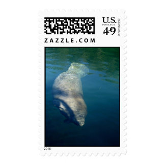 MANATEE SWIMMING POSTAGE STAMP