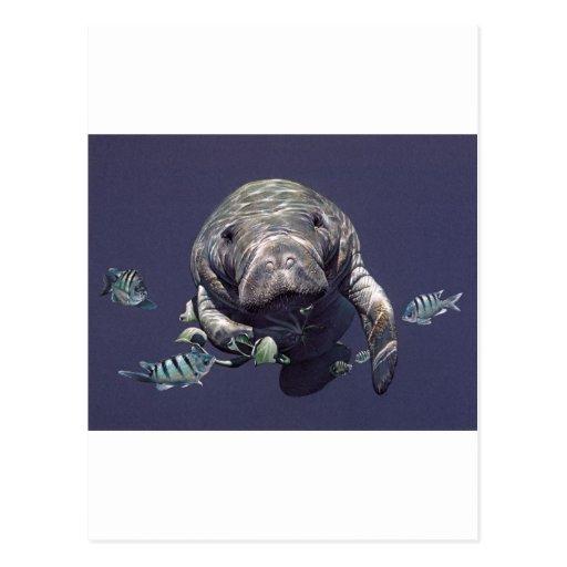 Manatee Underwater World Post Cards