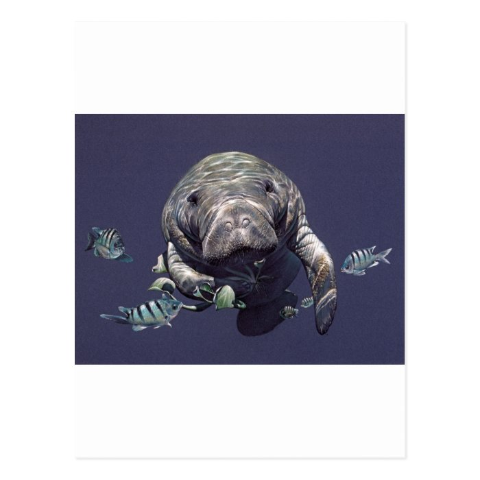 Manatee Underwater World Postcard