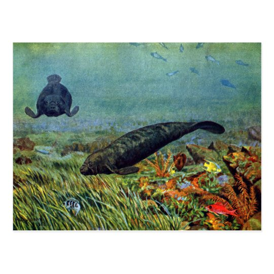Manatees and Colorful Fish Postcard