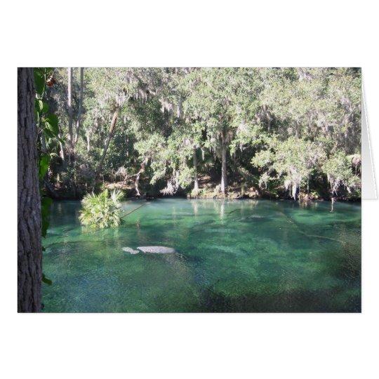 Manatees at Blue Springs Card