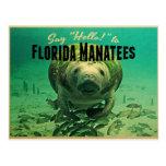 Manatees de la Florida Tarjeta Postal
