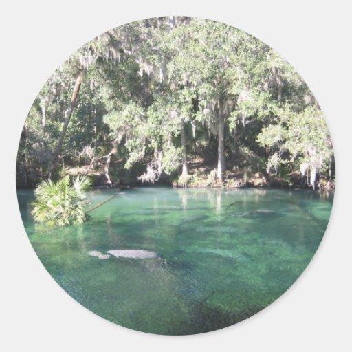 Manatees en el pegatina de Blue Springs