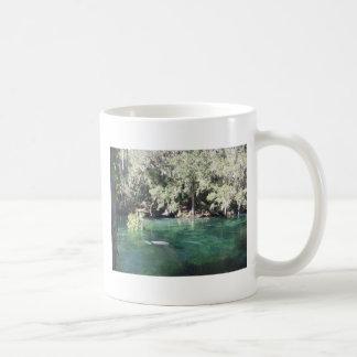 Manatees en la taza de Blue Springs