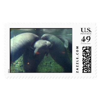 manatees lifting manatees stamps