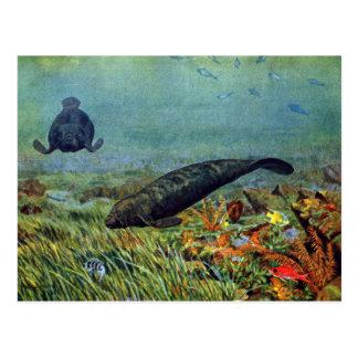 Manatees y pescados coloridos tarjetas postales
